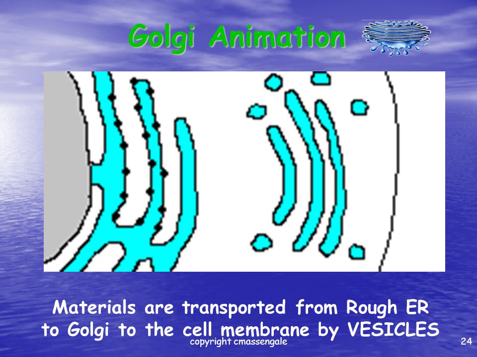 Golgi continued Processes, packages, and secretes substances out to other parts of the cell Processes, packages, and secretes substances out to other parts of the cell