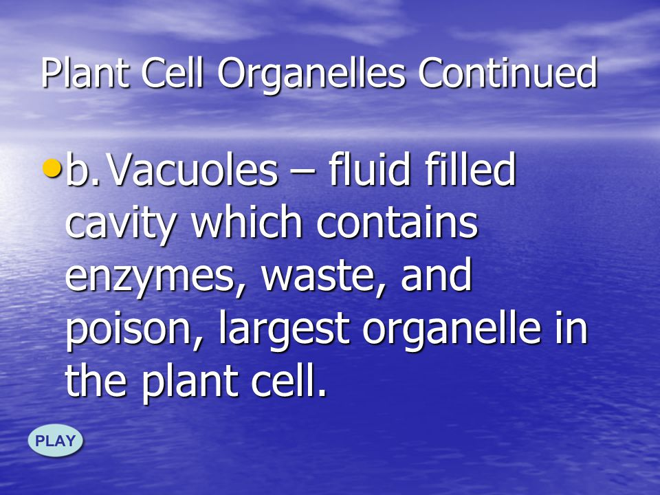 12. Additional Plant Cell Organelles a.Cell wall – surrounds the cell membrane, adds strength to the cell, and protects the cell, made of cellulose a.