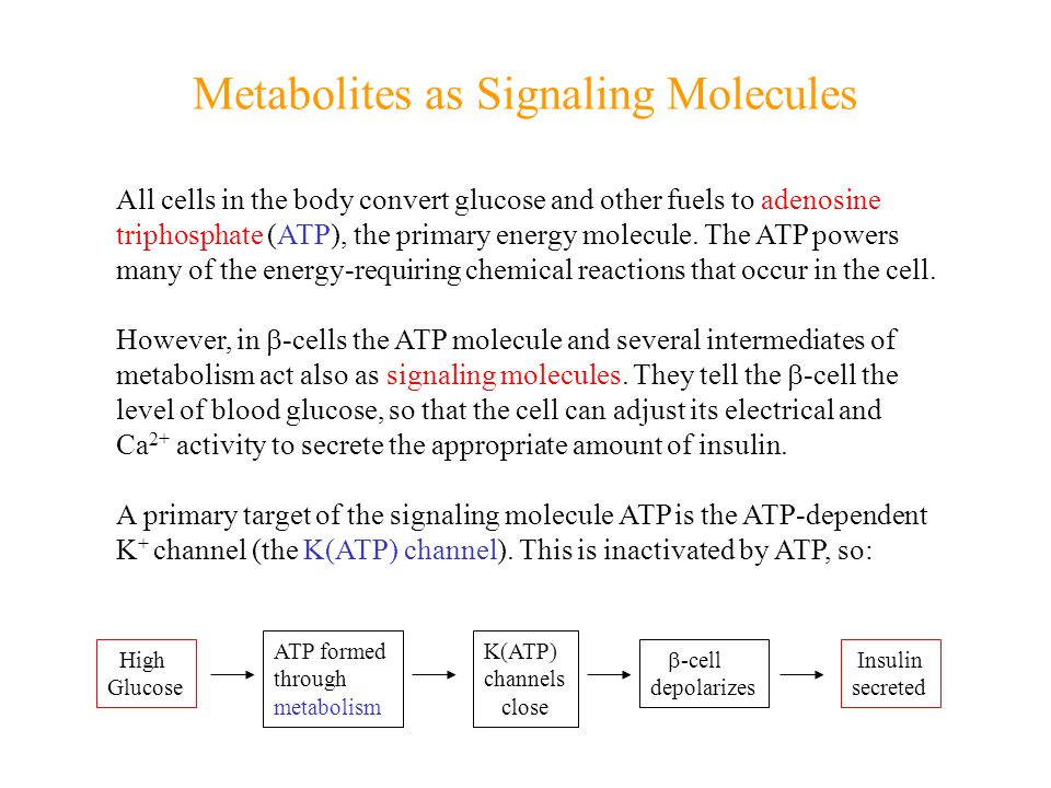 Metabolites as Signaling Molecules All cells in the body convert glucose and other fuels to adenosine triphosphate (ATP), the primary energy molecule.