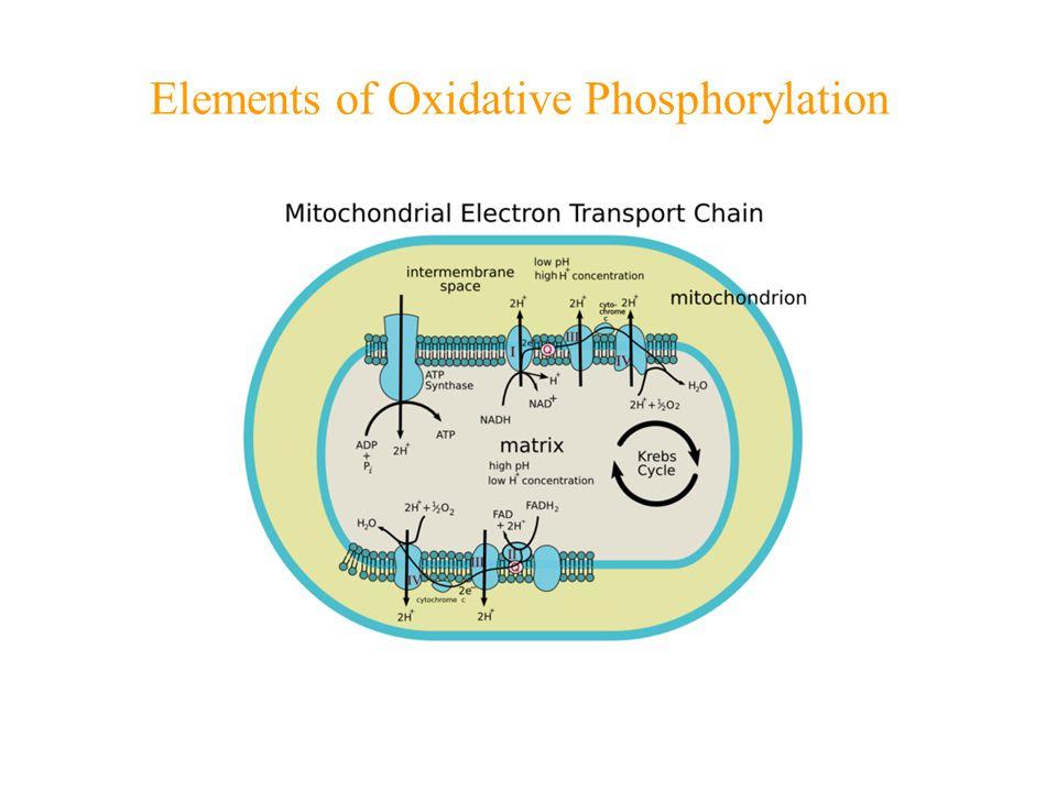 Elements of Oxidative Phosphorylation