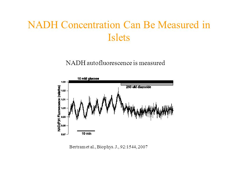 NADH Concentration Can Be Measured in Islets NADH autofluorescence is measured Bertram et al., Biophys. J., 92:1544, 2007