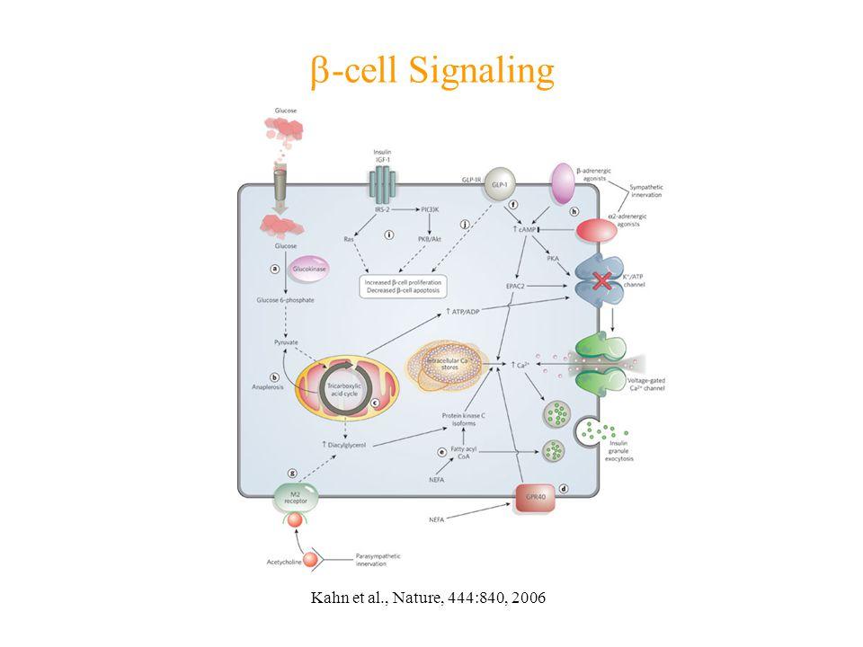  -cell Signaling Kahn et al., Nature, 444:840, 2006