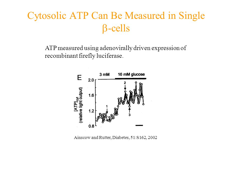 Cytosolic ATP Can Be Measured in Single  -cells ATP measured using adenovirally driven expression of recombinant firefly luciferase.