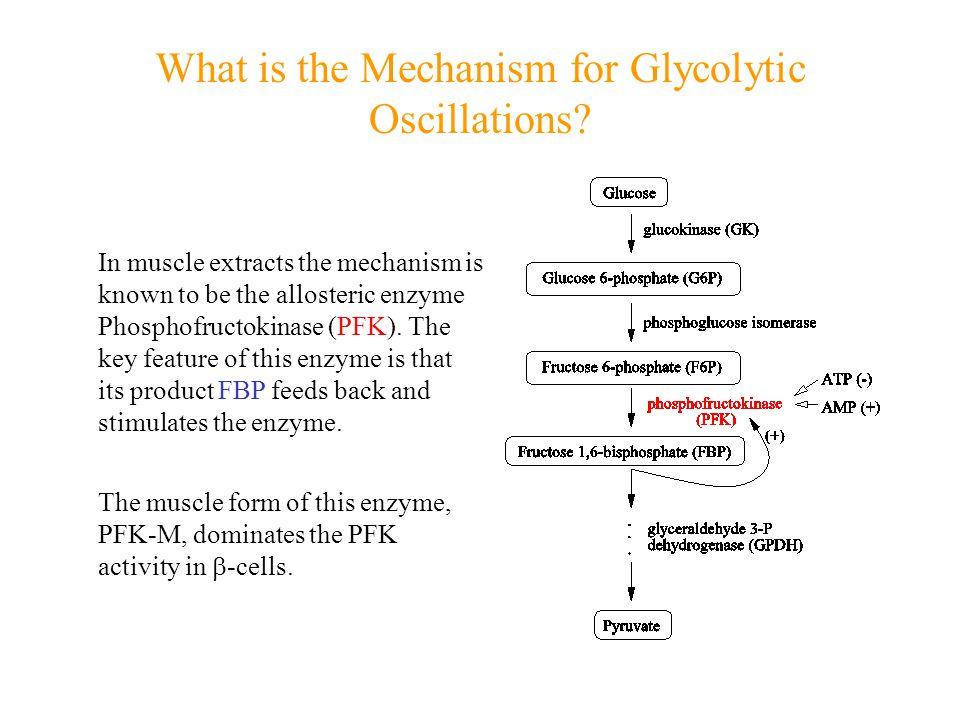 Cataplerosis of Malate Malate Oxaloacetate Phosphoenolpyruvate (PEP)