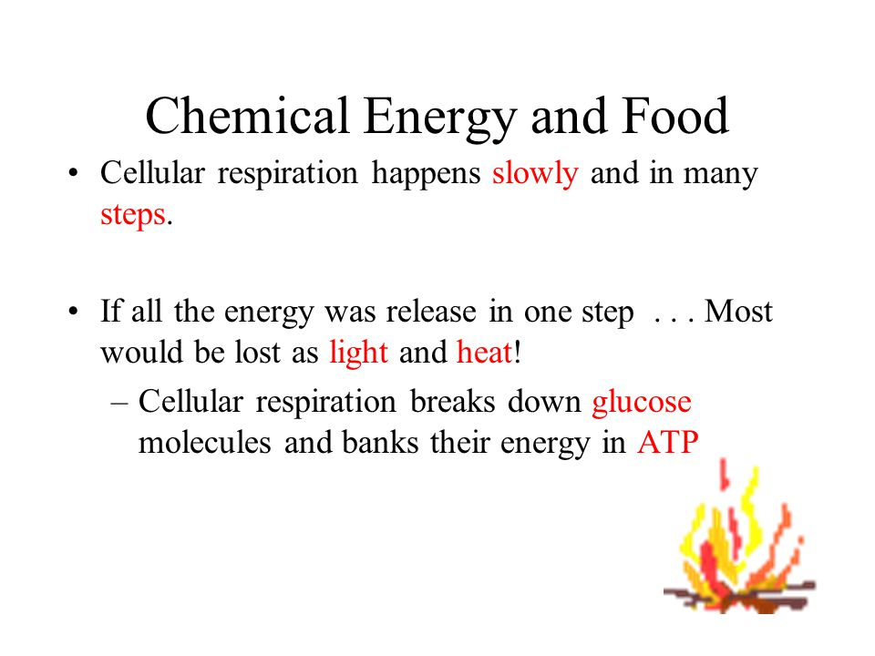 Chemical Energy and Food The two equations are exact opposites.