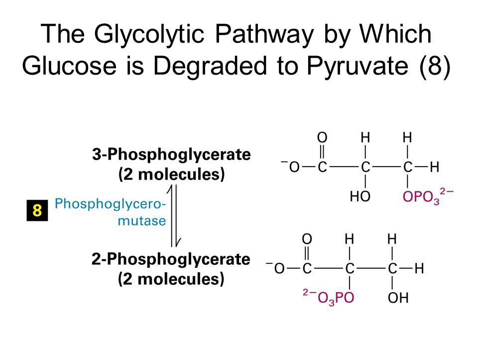 The Glycolytic Pathway by Which Glucose is Degraded to Pyruvate (8)