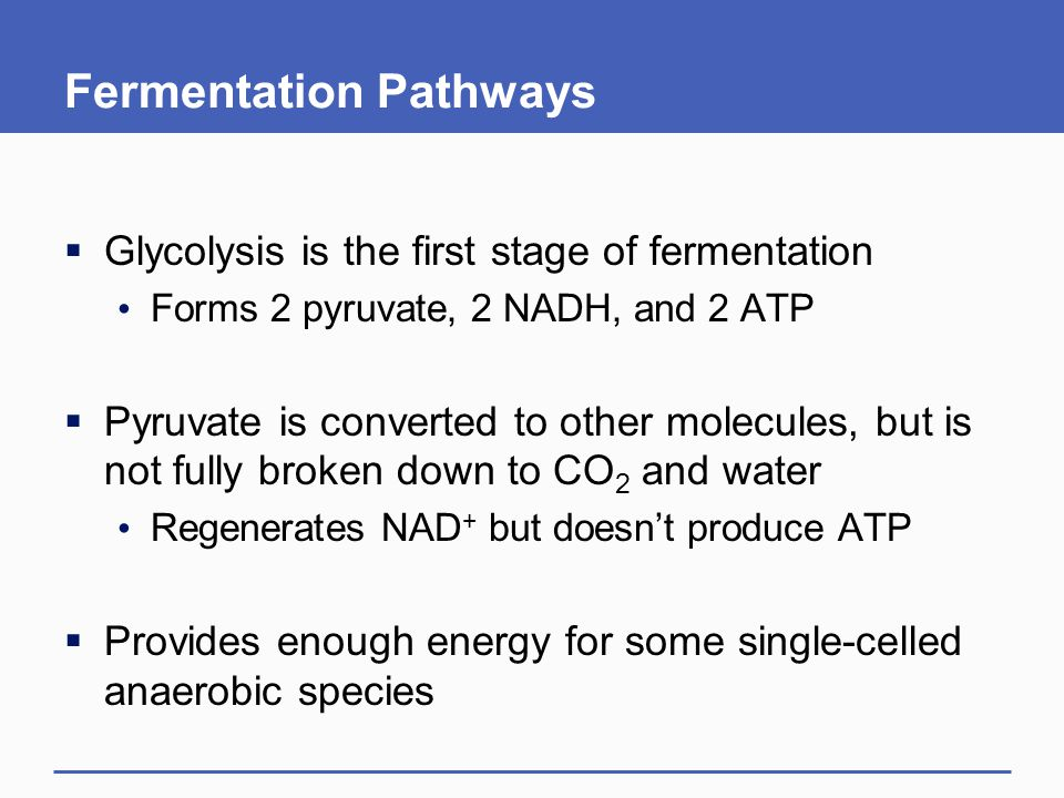 Fermentation Pathways  Glycolysis is the first stage of fermentation Forms 2 pyruvate, 2 NADH, and 2 ATP  Pyruvate is converted to other molecules, but is not fully broken down to CO 2 and water Regenerates NAD + but doesn't produce ATP  Provides enough energy for some single-celled anaerobic species