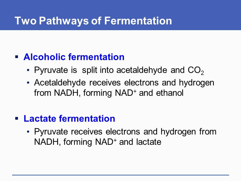 Two Pathways of Fermentation  Alcoholic fermentation Pyruvate is split into acetaldehyde and CO 2 Acetaldehyde receives electrons and hydrogen from NADH, forming NAD + and ethanol  Lactate fermentation Pyruvate receives electrons and hydrogen from NADH, forming NAD + and lactate