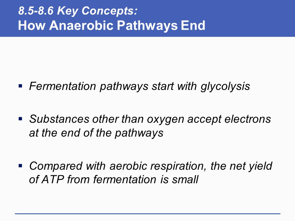 8.5-8.6 Key Concepts: How Anaerobic Pathways End  Fermentation pathways start with glycolysis  Substances other than oxygen accept electrons at the end of the pathways  Compared with aerobic respiration, the net yield of ATP from fermentation is small