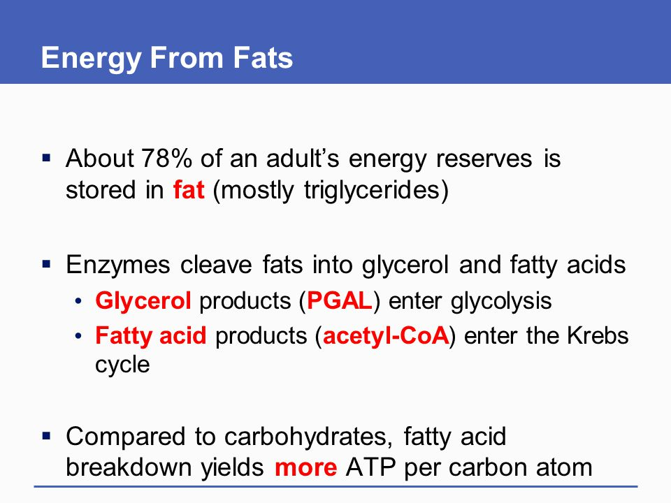 Energy From Fats  About 78% of an adult's energy reserves is stored in fat (mostly triglycerides)  Enzymes cleave fats into glycerol and fatty acids Glycerol products (PGAL) enter glycolysis Fatty acid products (acetyl-CoA) enter the Krebs cycle  Compared to carbohydrates, fatty acid breakdown yields more ATP per carbon atom