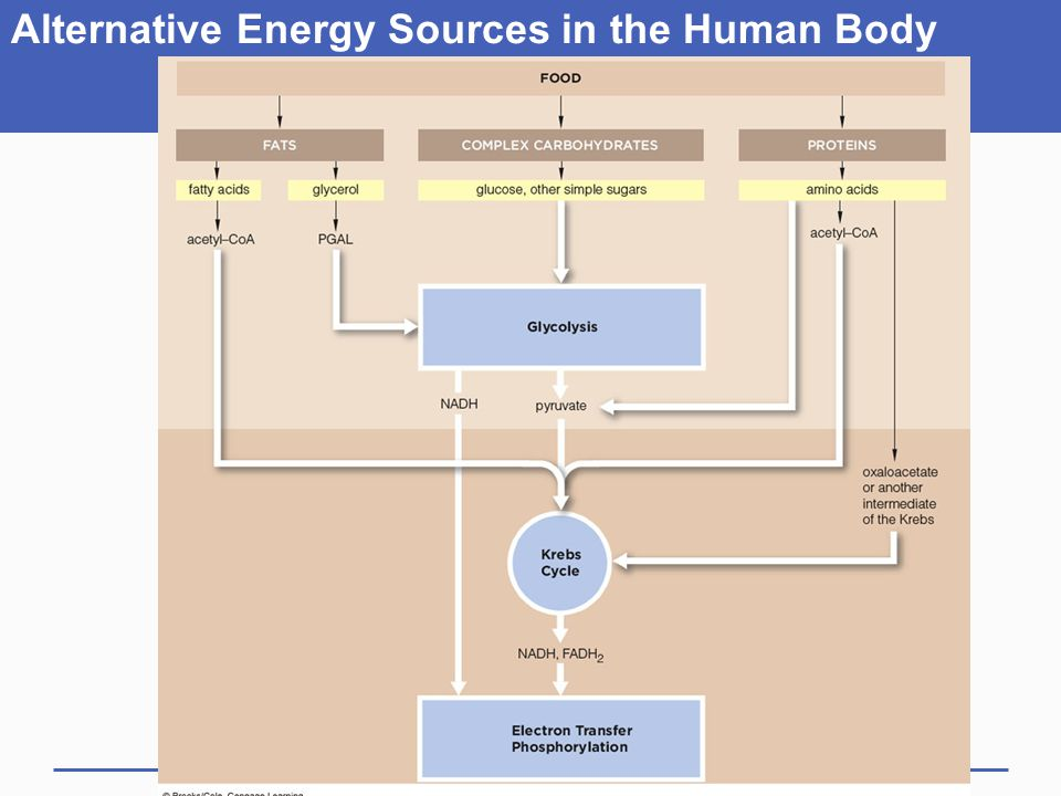 Alternative Energy Sources in the Human Body