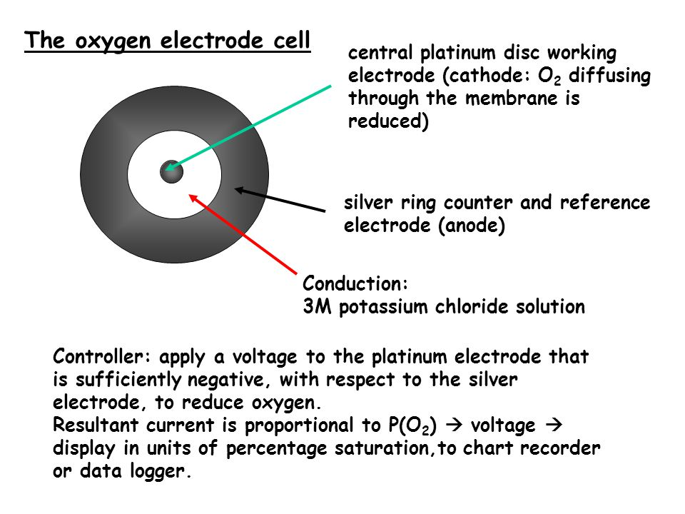 central platinum disc working electrode (cathode: O 2 diffusing through the membrane is reduced) The oxygen electrode cell silver ring counter and reference electrode (anode) Conduction: 3M potassium chloride solution Controller: apply a voltage to the platinum electrode that is sufficiently negative, with respect to the silver electrode, to reduce oxygen.