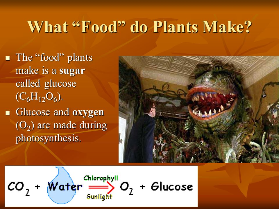 What Food do Plants Make. The food plants make is a sugar called glucose (C 6 H 12 O 6 ).