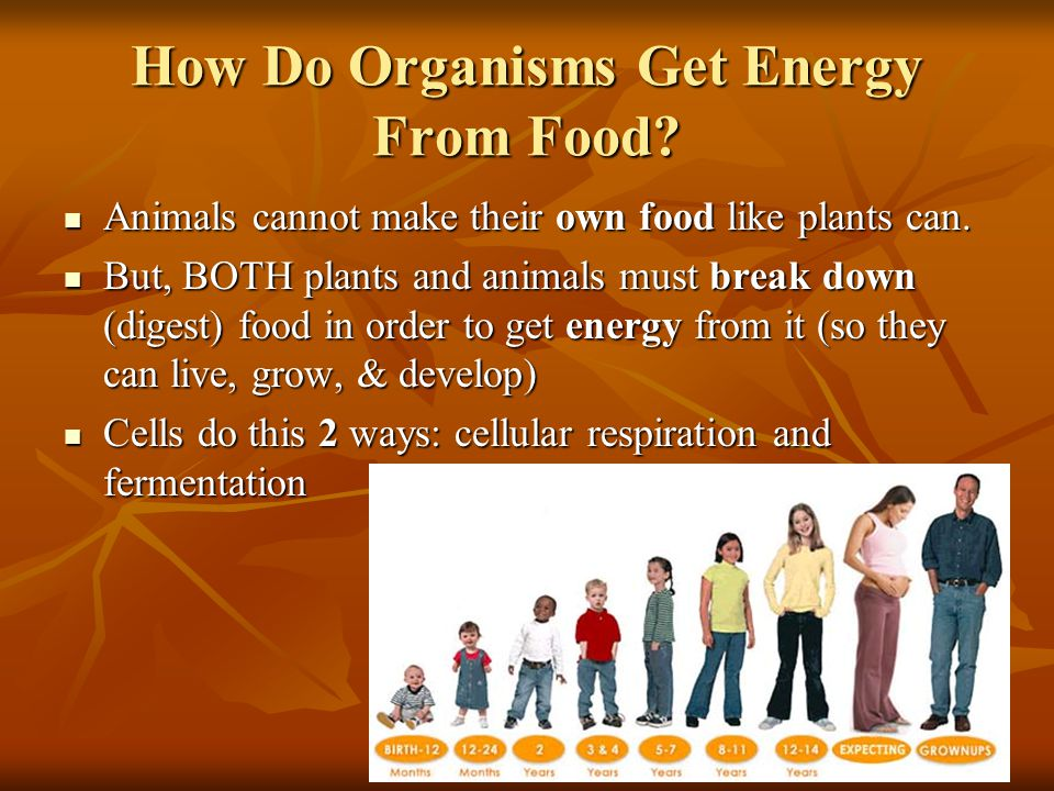 How Do Organisms Get Energy From Food. Animals cannot make their own food like plants can.