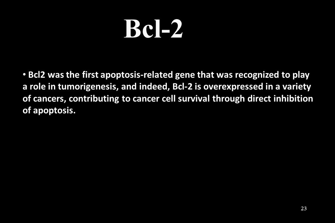 Bcl-2 23 Bcl2 was the first apoptosis-related gene that was recognized to play a role in tumorigenesis, and indeed, Bcl-2 is overexpressed in a variet