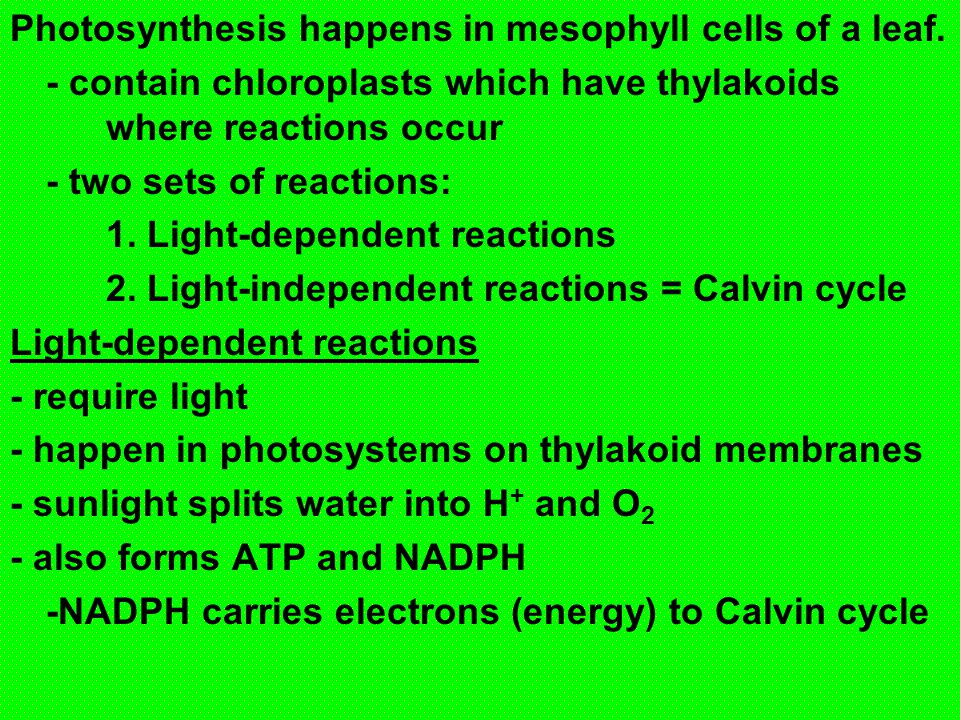 Summary of ATP production in Cellular Respiration