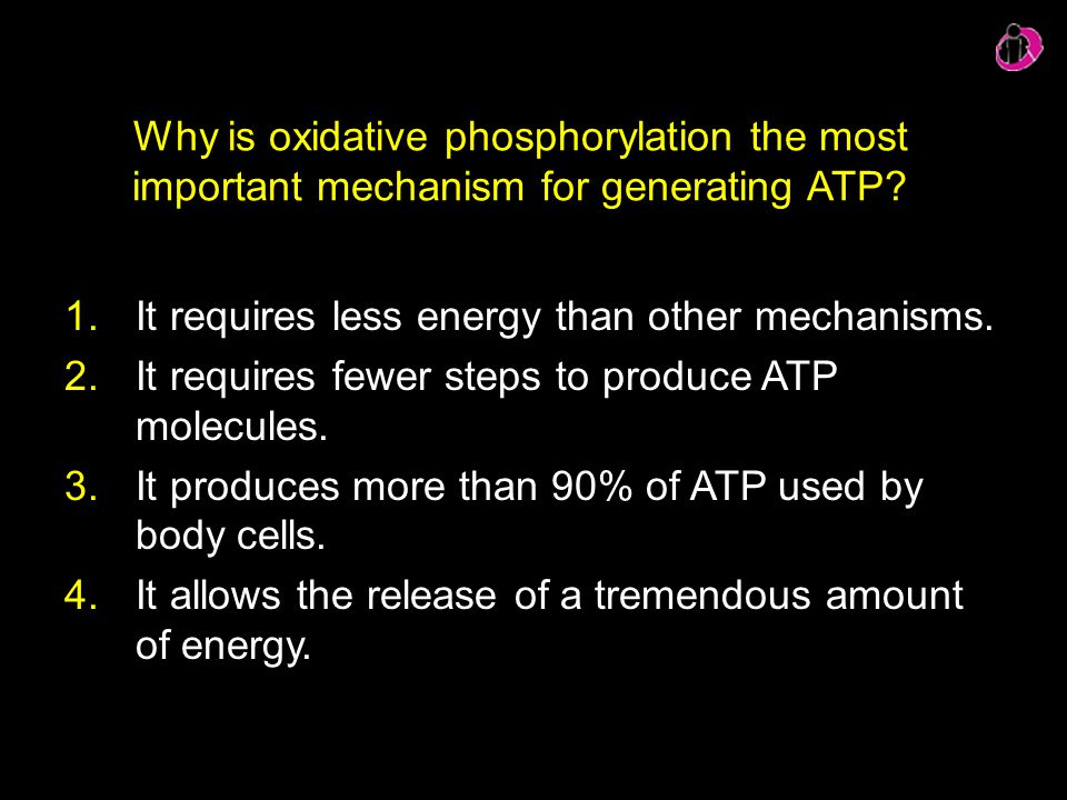 Why is oxidative phosphorylation the most important mechanism for generating ATP? 1.It requires less energy than other mechanisms. 2.It requires fewer