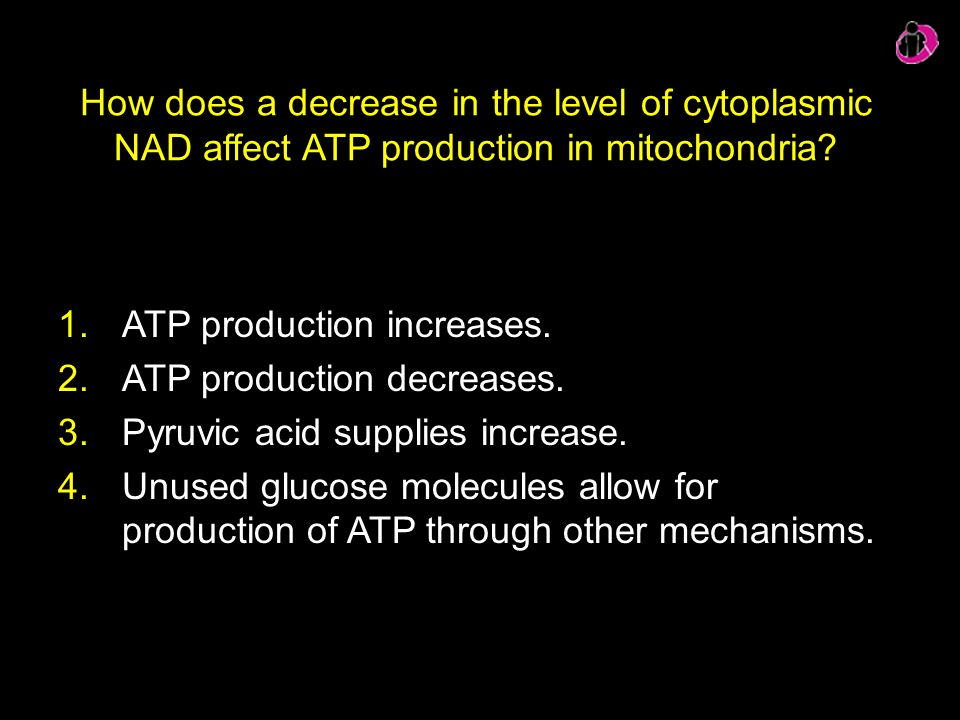 How does a decrease in the level of cytoplasmic NAD affect ATP production in mitochondria? 1.ATP production increases. 2.ATP production decreases. 3.P