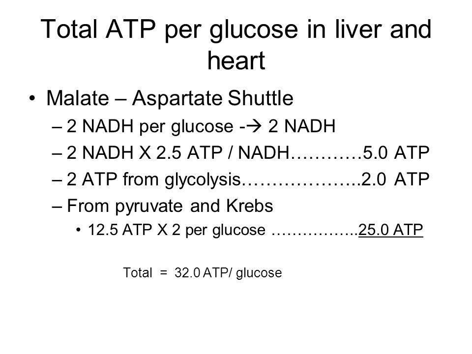 Total ATP per glucose in liver and heart Malate – Aspartate Shuttle –2 NADH per glucose -  2 NADH –2 NADH X 2.5 ATP / NADH…………5.0 ATP –2 ATP from glycolysis………………..2.0 ATP –From pyruvate and Krebs 12.5 ATP X 2 per glucose ……………..25.0 ATP Total = 32.0 ATP/ glucose