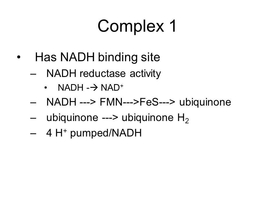 Complex 1 Has NADH binding site –NADH reductase activity NADH -  NAD + –NADH ---> FMN--->FeS---> ubiquinone –ubiquinone ---> ubiquinone H 2 –4 H + pumped/NADH