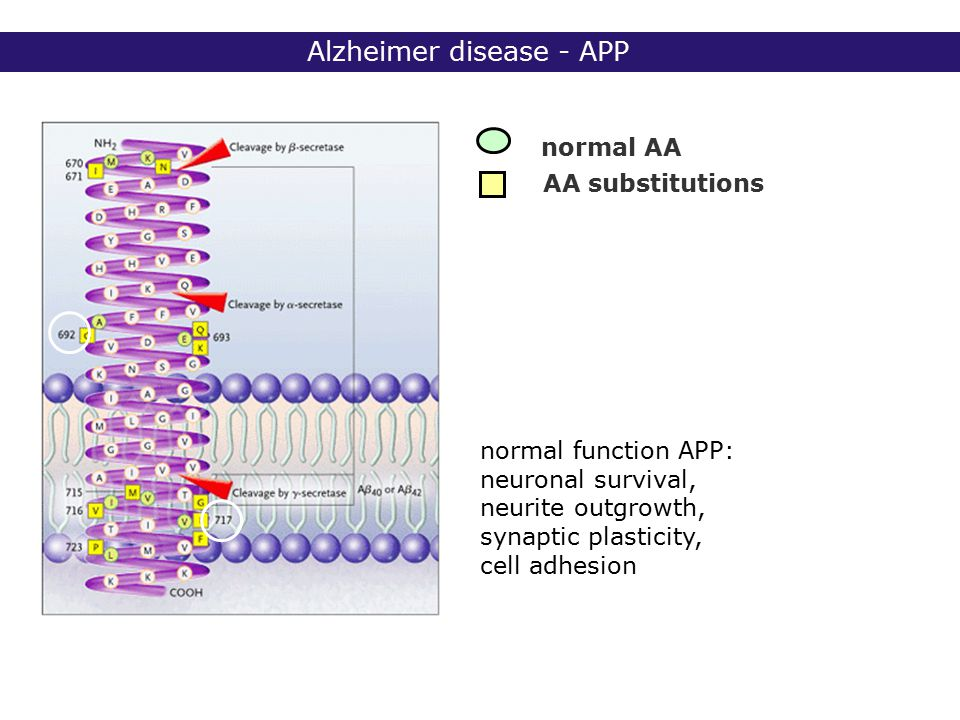 2° lic Biomedische Wetenschappen 2006 - 2007 Alzheimer disease - APP normal AA AA substitutions normal function APP: neuronal survival, neurite outgrowth, synaptic plasticity, cell adhesion