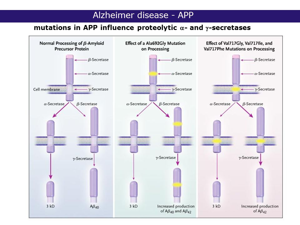 2° lic Biomedische Wetenschappen 2006 - 2007 Alzheimer disease - APP mutations in APP influence proteolytic - and -secretases