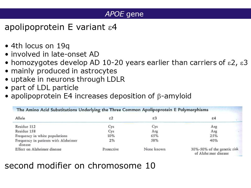 2° lic Biomedische Wetenschappen 2006 - 2007 APOE gene apolipoprotein E variant 4 4th locus on 19q involved in late-onset AD homozygotes develop AD 10-20 years earlier than carriers of 2, 3 mainly produced in astrocytes uptake in neurons through LDLR part of LDL particle apolipoprotein E4 increases deposition of -amyloid second modifier on chromosome 10
