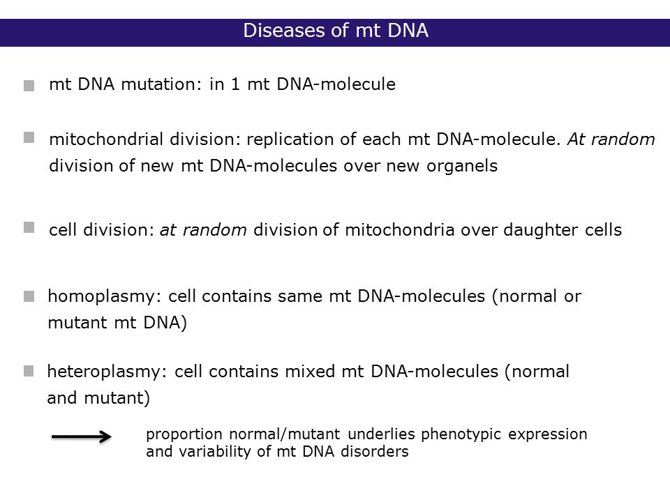mt DNA mutation: in 1 mt DNA-molecule homoplasmy: cell contains same mt DNA-molecules (normal or mutant mt DNA) heteroplasmy: cell contains mixed mt DNA-molecules (normal and mutant) mitochondrial division: replication of each mt DNA-molecule.