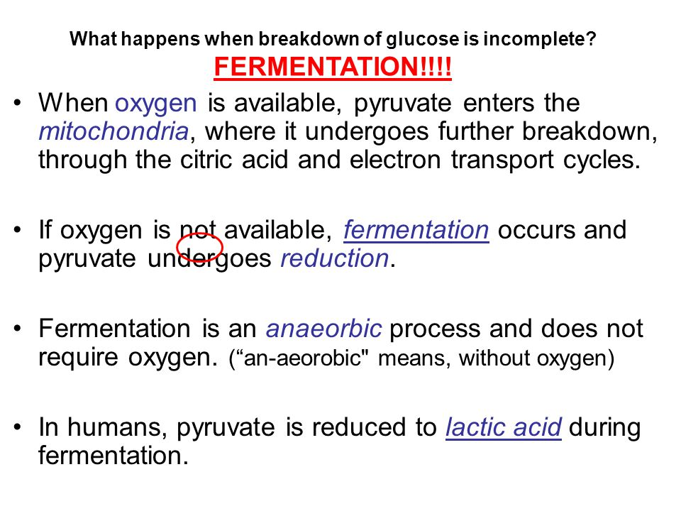 When oxygen is available, pyruvate enters the mitochondria, where it undergoes further breakdown, through the citric acid and electron transport cycle