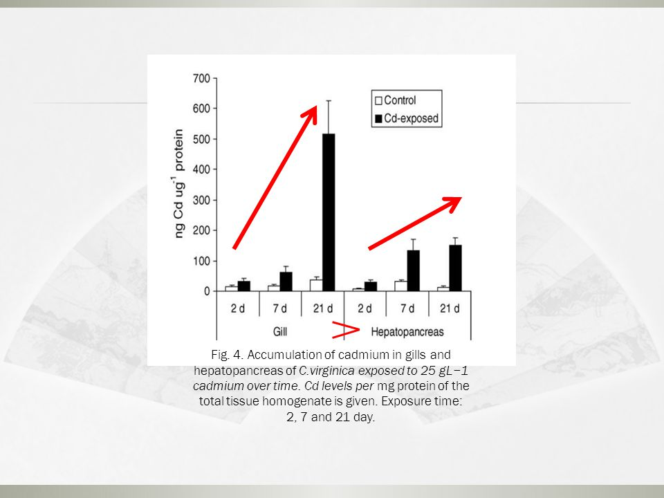 Fig. 4. Accumulation of cadmium in gills and hepatopancreas of C.virginica exposed to 25 gL−1 cadmium over time. Cd levels per mg protein of the total