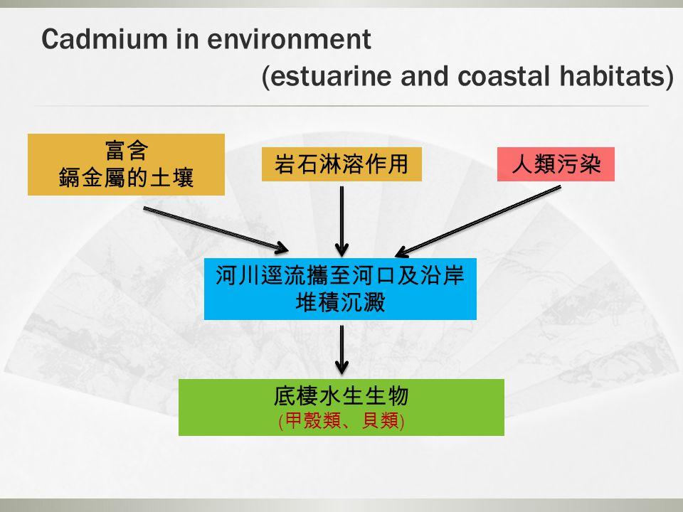 Cadmium in environment (estuarine and coastal habitats) 富含 鎘金屬的土壤 岩石淋溶作用人類污染 河川逕流攜至河口及沿岸 堆積沉澱 底棲水生生物 ( 甲殼類、貝類 )
