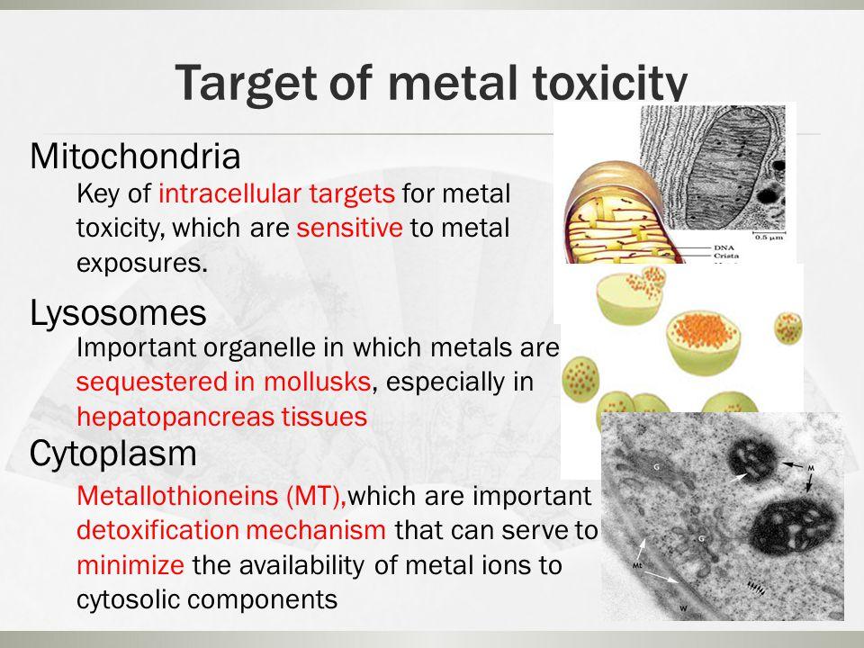 Cd 2+ ATP Cd 2+ Disturbance of tissue energy balance and cell death