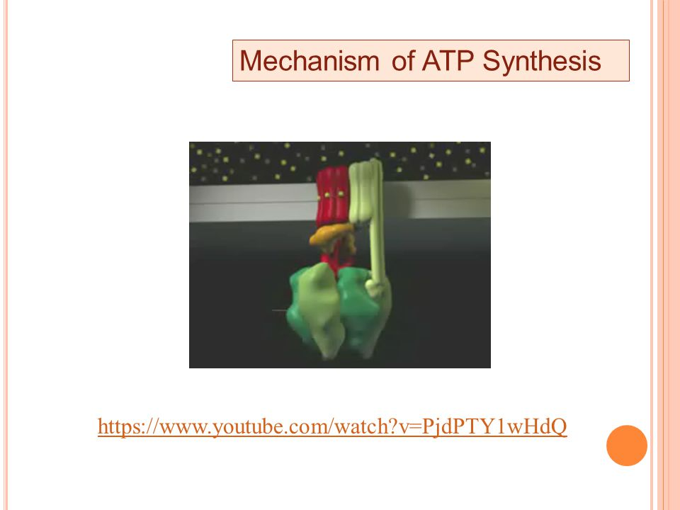 Mechanism of ATP Synthesis https://www.youtube.com/watch v=PjdPTY1wHdQ