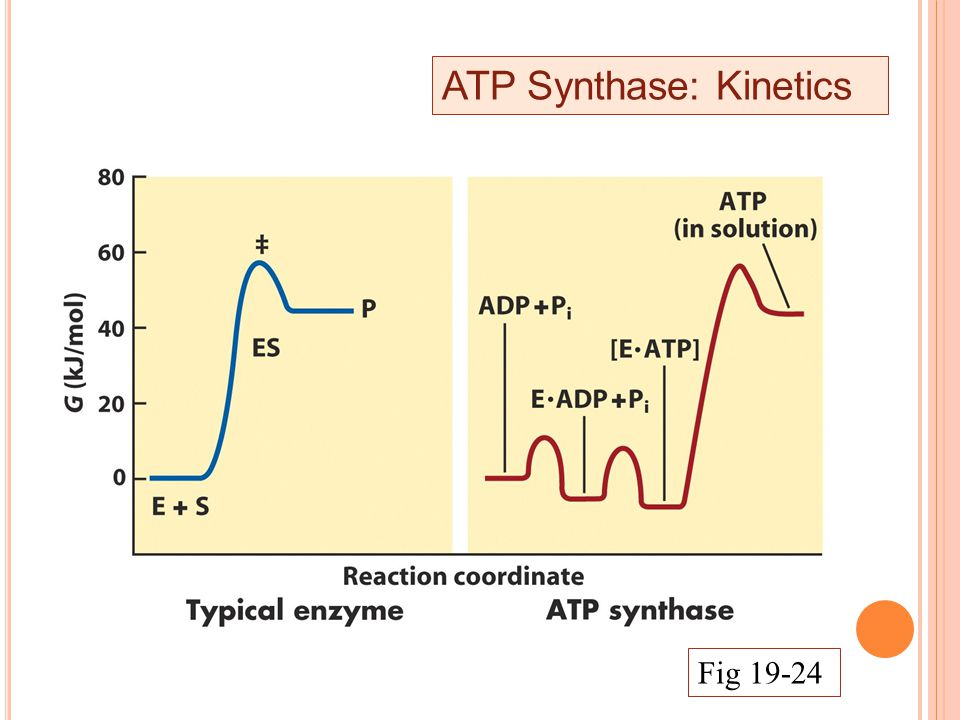 ATP Synthase: Kinetics Fig 19-24