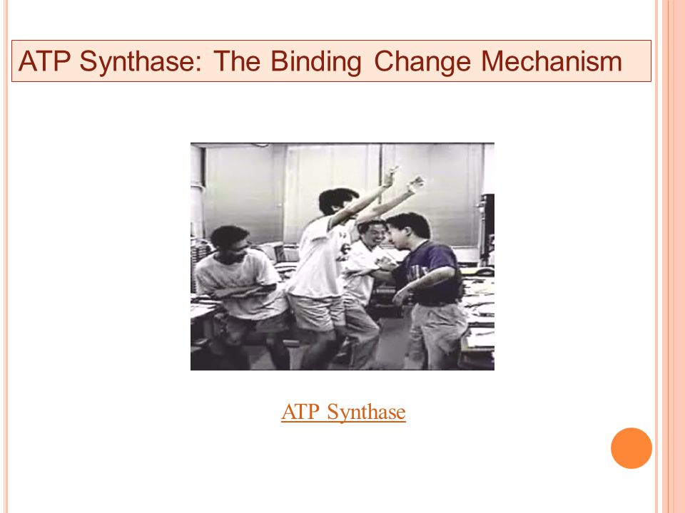 ATP Synthase ATP Synthase: The Binding Change Mechanism
