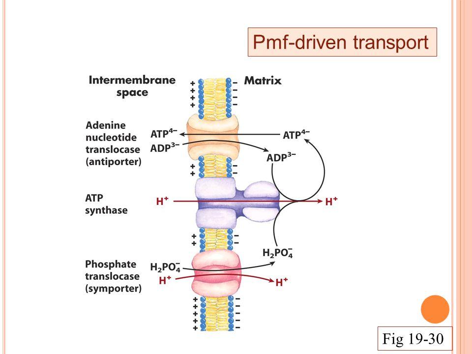 Pmf-driven transport Fig 19-30