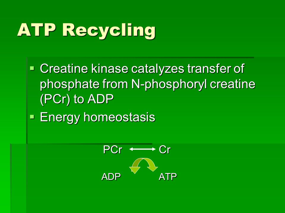 ATP Recycling  Creatine kinase catalyzes transfer of phosphate from N-phosphoryl creatine (PCr) to ADP  Energy homeostasis PCr Cr PCr Cr ADP ATP ADP ATP
