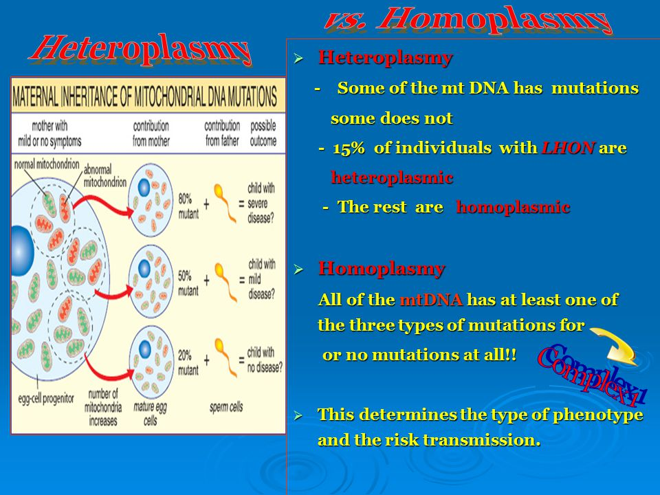 Heteroplasmy Heteroplasmy  Heteroplasmy - Some of the mt DNA has mutations - Some of the mt DNA has mutations some does not some does not - 15% of individuals with LHON are - 15% of individuals with LHON are heteroplasmic heteroplasmic - The rest are homoplasmic - The rest are homoplasmic  Homoplasmy All of the mtDNA has at least one of the three types of mutations for All of the mtDNA has at least one of the three types of mutations for or no mutations at all!.