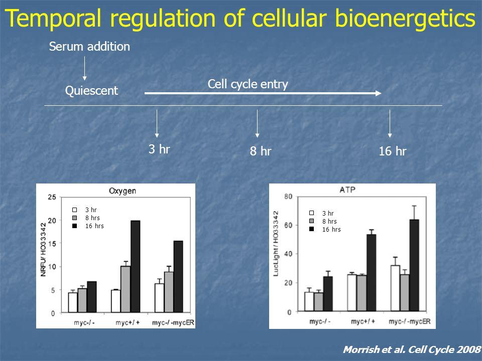3 hr 8 hrs 16 hrs 3 hr 8 hrs 16 hrs Temporal regulation of cellular bioenergetics Morrish et al.