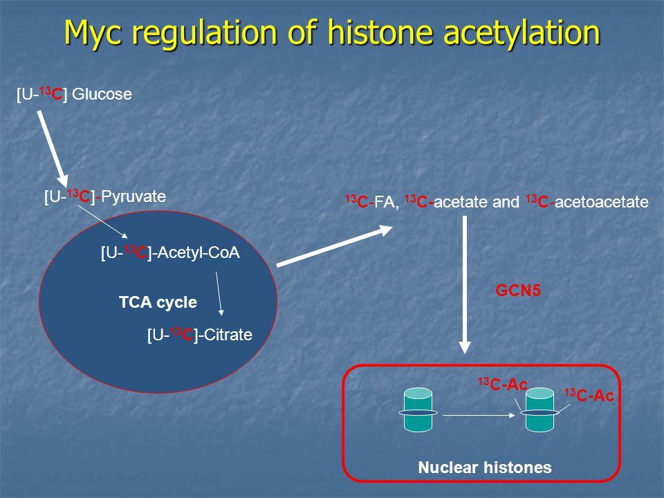 Myc regulation of histone acetylation TCA cycle [U- 13 C] Glucose [U- 13 C]-Pyruvate 13 C-FA, 13 C-acetate and 13 C-acetoacetate 13 C-Ac GCN5 [U- 13 C]-Acetyl-CoA [U- 13 C]-Citrate Nuclear histones