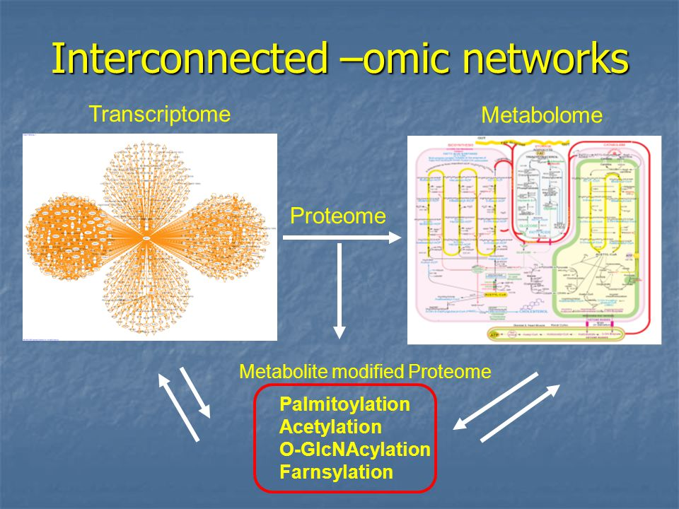 Interconnected –omic networks Transcriptome Metabolome Proteome Metabolite modified Proteome Palmitoylation Acetylation O-GlcNAcylation Farnsylation