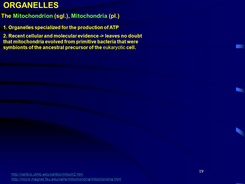 19 The Mitochondrion (sgl.), Mitochondria (pl.) 1.