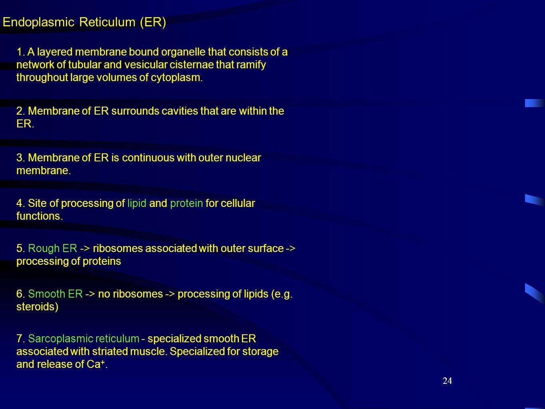 24 Endoplasmic Reticulum (ER) 1.