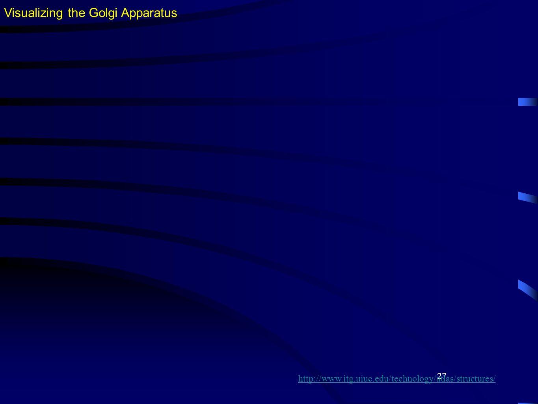 27 Visualizing the Golgi Apparatus http://www.itg.uiuc.edu/technology/atlas/structures/