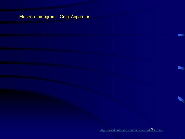 28 Electron tomogram - Golgi Apparatus http://bio3d.colorado.edu/pubs/Golgi/Gset1.html