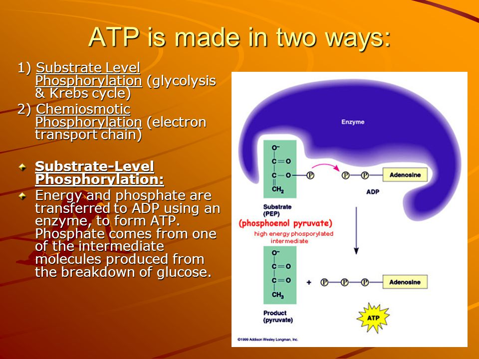 ATP is made in two ways: 1) Substrate Level Phosphorylation (glycolysis & Krebs cycle) 2) Chemiosmotic Phosphorylation (electron transport chain) Substrate-Level Phosphorylation: Energy and phosphate are transferred to ADP using an enzyme, to form ATP.
