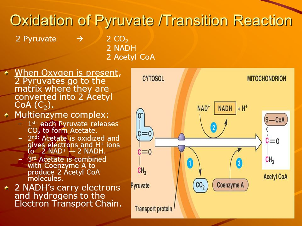 Oxidation of Pyruvate /Transition Reaction When Oxygen is present, 2 Pyruvates go to the matrix where they are converted into 2 Acetyl CoA (C 2 ).