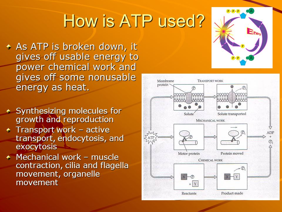 How is ATP used.