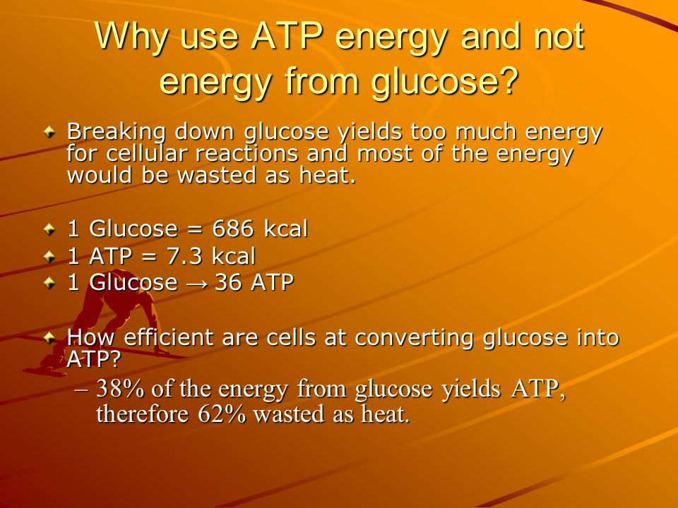 Why use ATP energy and not energy from glucose.
