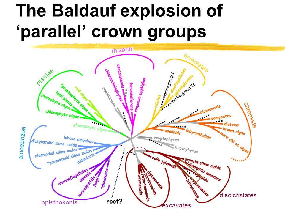 The Baldauf explosion of 'parallel' crown groups amoebozoa opisthokonts excavates discicristates chromists alveolates cercozoa plantae rhizaria